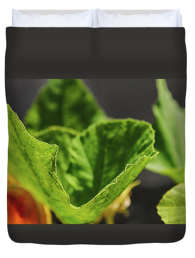 Landscape Duvet Cover featuring the photograph Pumpkin Leaf 2 by Dawn Whiteaker