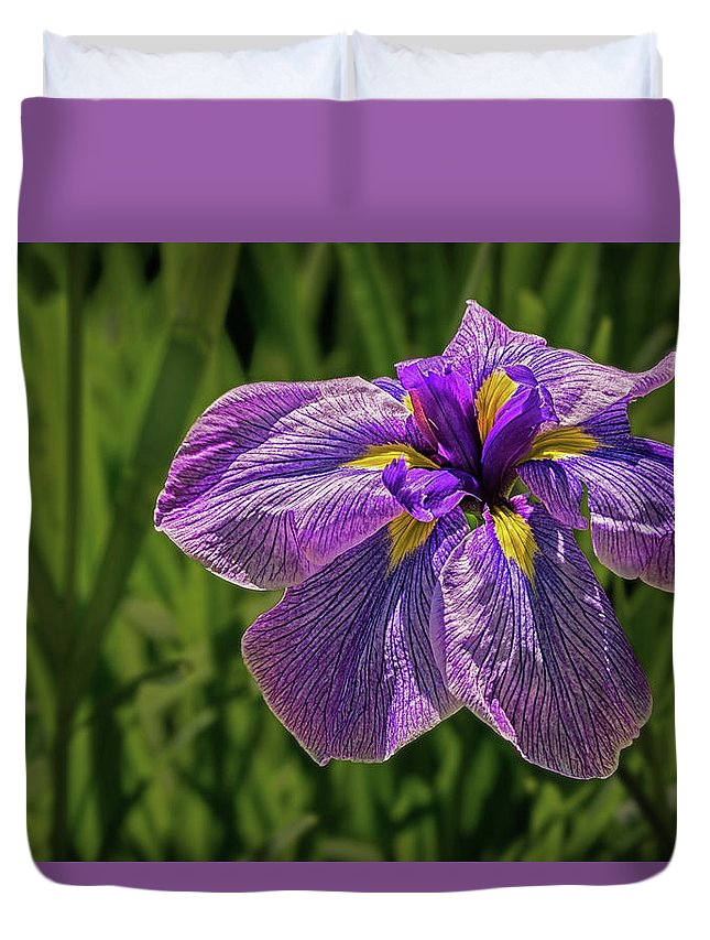 Purple Iris In Spring Duvet Cover featuring the photograph Puple Iris In Spring by Janet Ballard