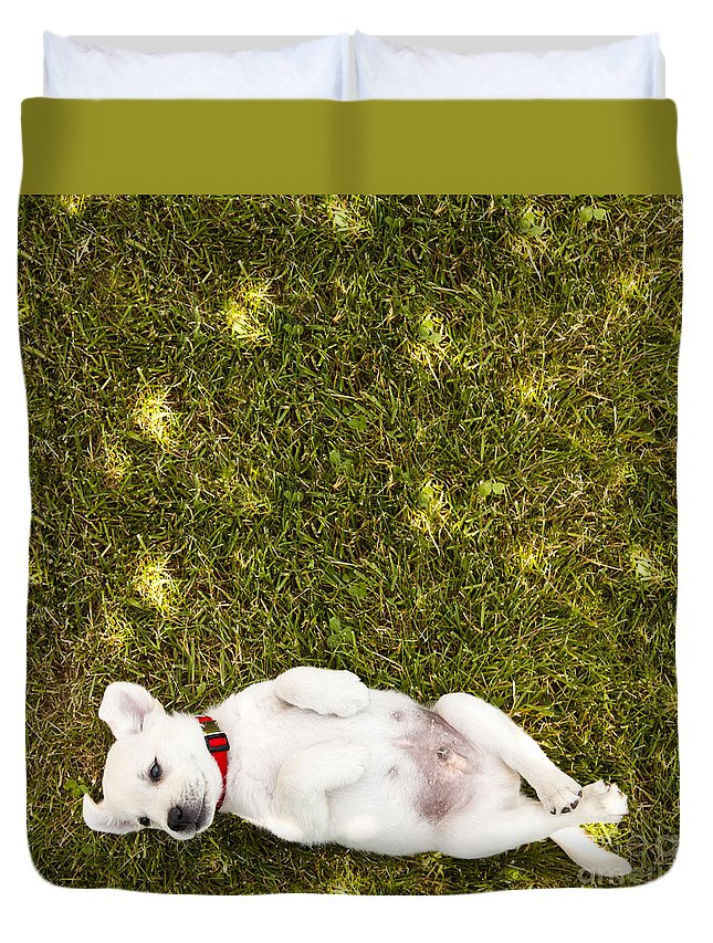 Puppy Duvet Cover featuring the photograph Puppy in the Grass by Diane Diederich