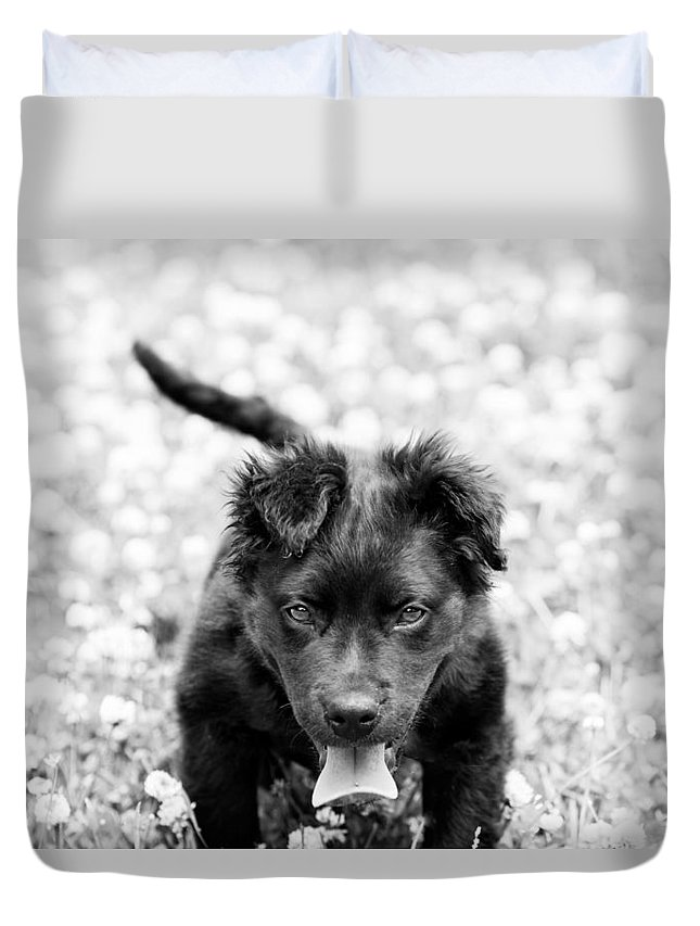 Dog Duvet Cover featuring the photograph Puppy Play by James Hennis