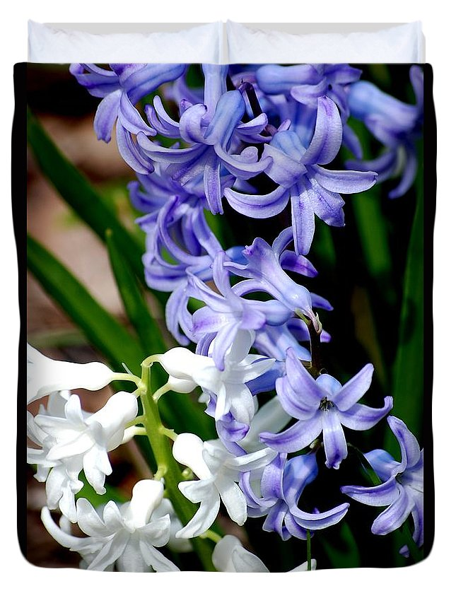Digital Photography Duvet Cover featuring the photograph Purple And White Hyacinth by David Lane