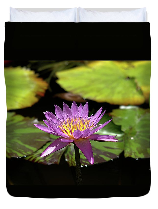 Roy Williams Duvet Cover featuring the photograph Purple And Yellow Water Lily by Roy Williams