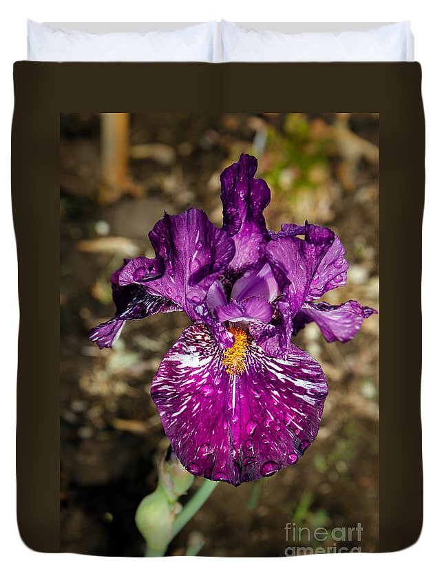Iris Duvet Cover featuring the photograph Purple Bearded Iris by Robert Bales
