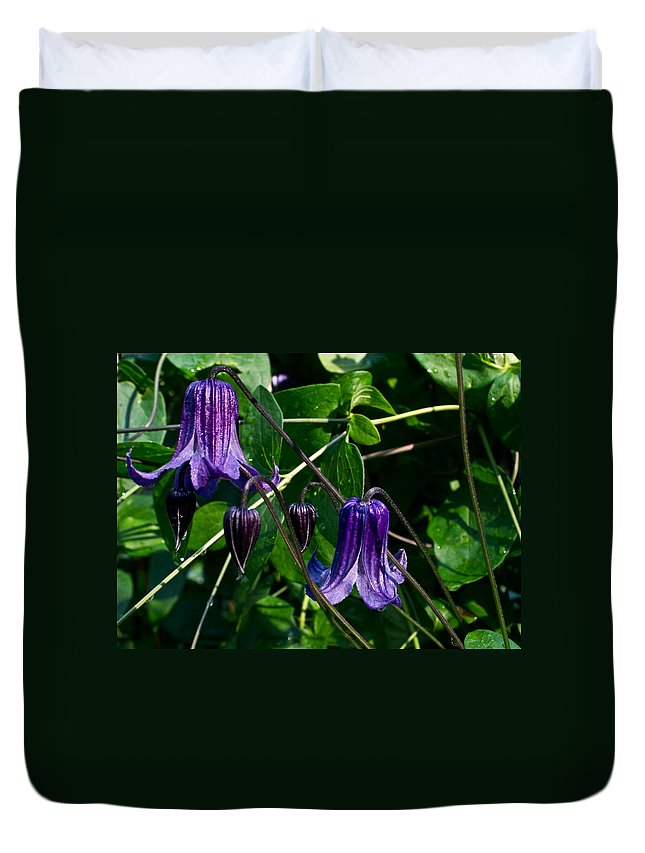 Clamatis Duvet Cover featuring the photograph Purple Clamatis Bells by Douglas Barnett