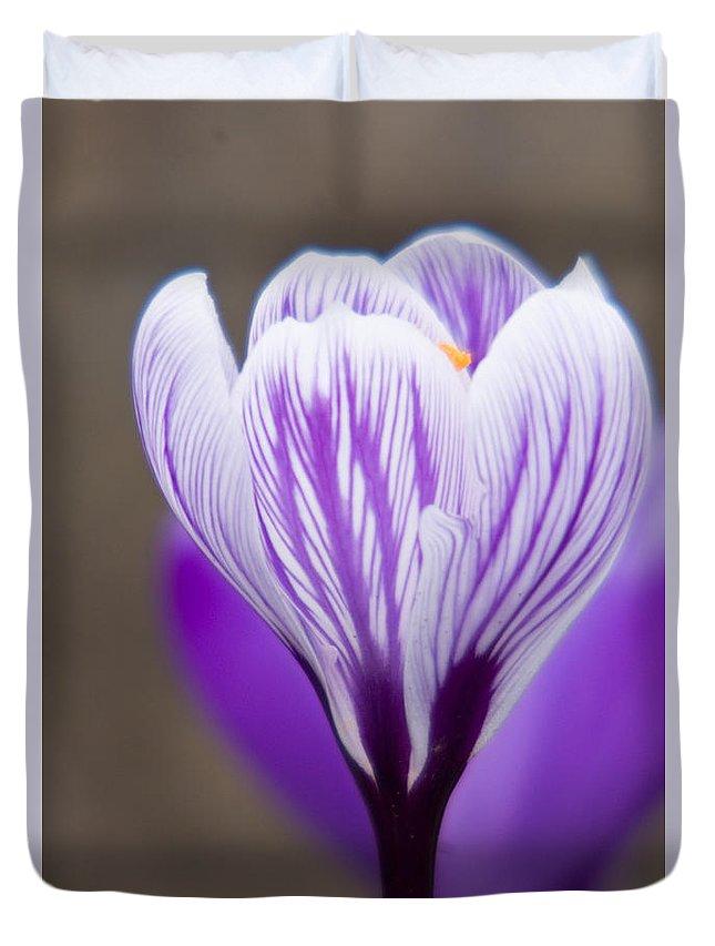 Crocus Duvet Cover featuring the photograph Purple Crocus by Jill Greenaway