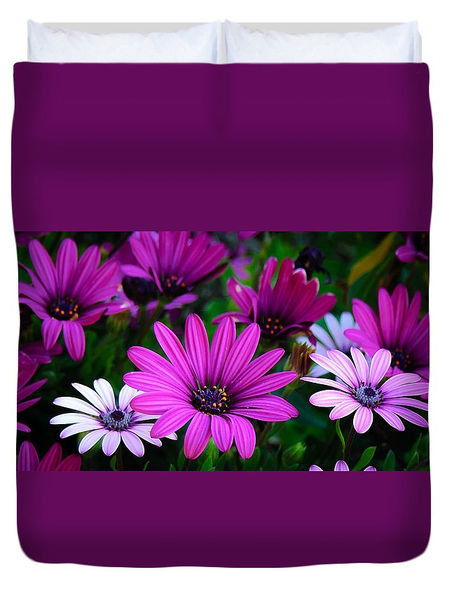 Art Duvet Cover featuring the photograph Purple Daisies by Rosemary Smith