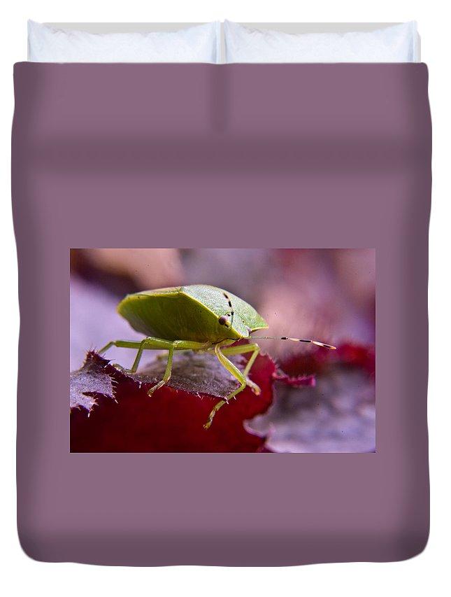 Purple Duvet Cover featuring the photograph Purple Eyed Green Stink Bug by Douglas Barnett