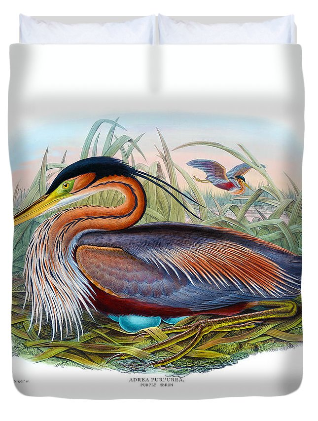 Purple Heron Duvet Cover featuring the painting Purple Heron Antique Bird Print John Gould The Birds Of Great Britain by Orchard Arts