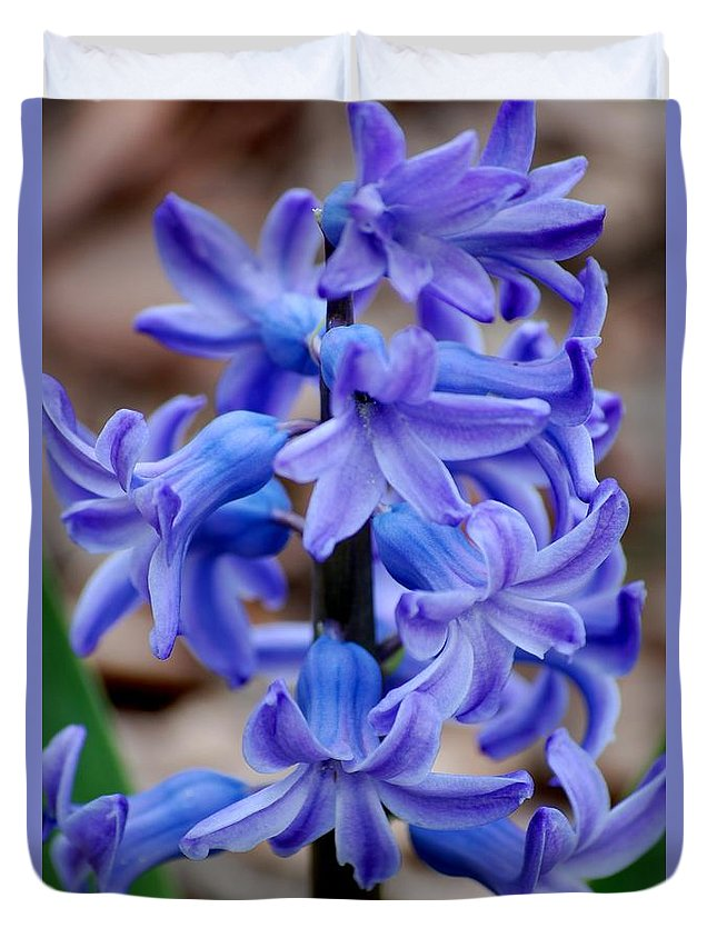Digital Photography Duvet Cover featuring the photograph Purple Hyacinth by David Lane