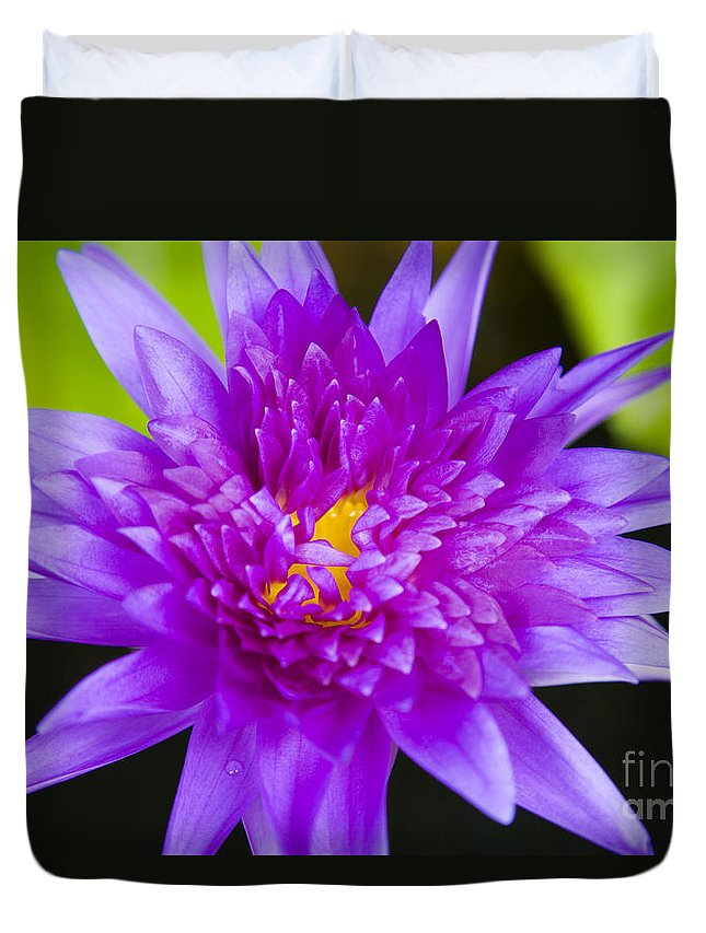 Afternoon Duvet Cover featuring the photograph Purple Lotus by Dana Edmunds - Printscapes