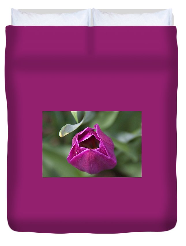 Flowers Duvet Cover featuring the photograph Purple by Matthew Viveiros