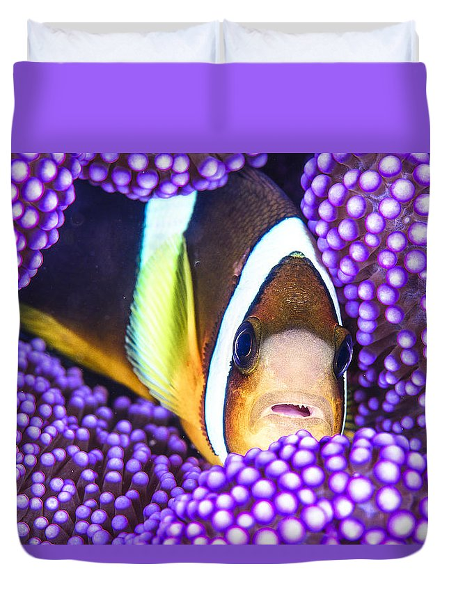 #purple #clownfish #anenemonefish #anemone #philippines #scubadiving #marine #anilao #underwaterphotography Duvet Cover featuring the photograph Purple Passion by Gabriel De Leon