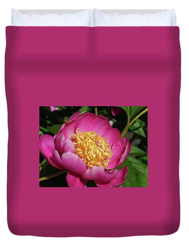 Peonies Duvet Cover featuring the photograph Purple Peony by Cate Franklyn
