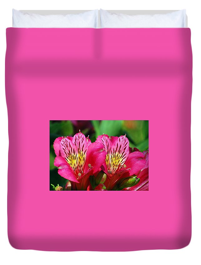 Peruvian Duvet Cover featuring the photograph Purple Peruvian Lily by Amy Fose
