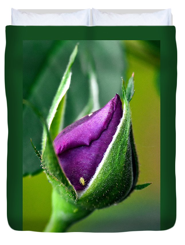 Rose Duvet Cover featuring the photograph Purple Rose Bud by Christopher Holmes