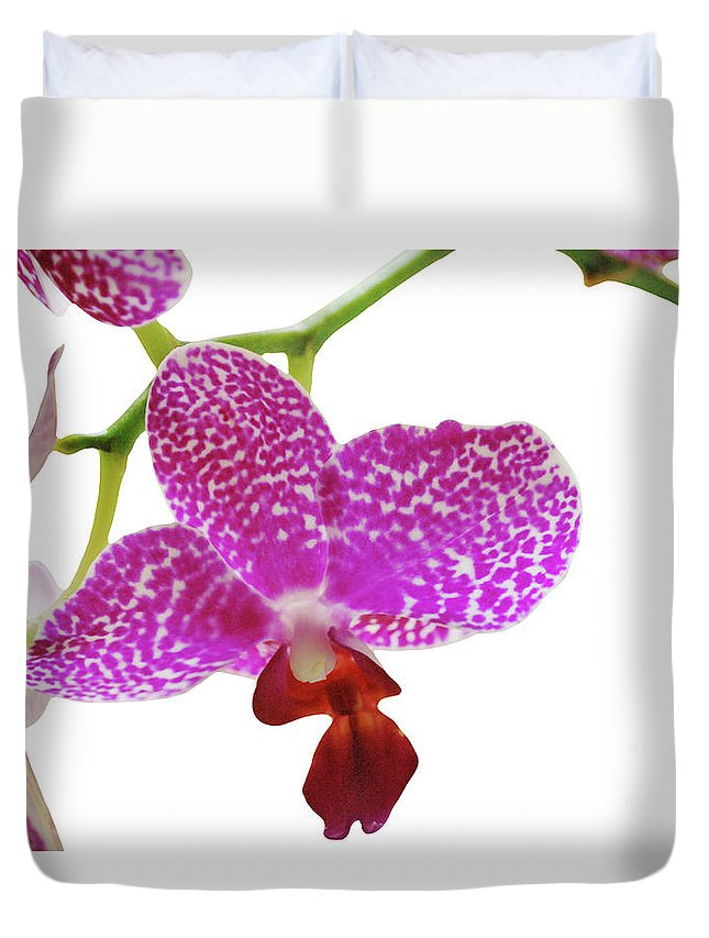 Phalaenopsis Duvet Cover featuring the photograph Purple Spotted Orchid On White by Heather Kirk