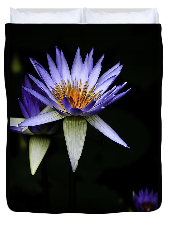 Purple Waterlily Water Lily Flower Flora Duvet Cover featuring the photograph Purple Waterlily by Sheila Smart Fine Art Photography