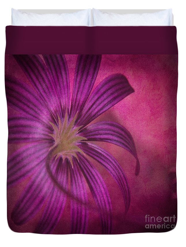 Osteospermum Duvet Cover featuring the photograph Put In A Box by Clare Bevan