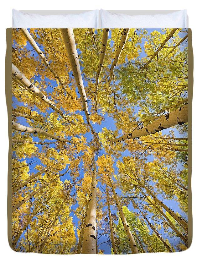 00559133 Duvet Cover featuring the photograph Quaking Aspens Overhead by Yva Momatiuk John Eastcott