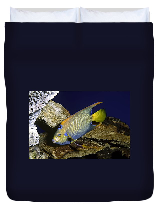 Queen Angelfish Duvet Cover featuring the photograph Queen Angelfish by Sally Weigand