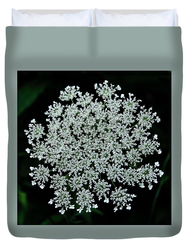 Queen Anne's Lace Duvet Cover featuring the photograph Queen Anne by Allen Nice-Webb
