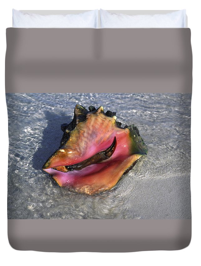 Queen Conch Shell Duvet Cover featuring the photograph Queen Conch Peeking by Sally Weigand