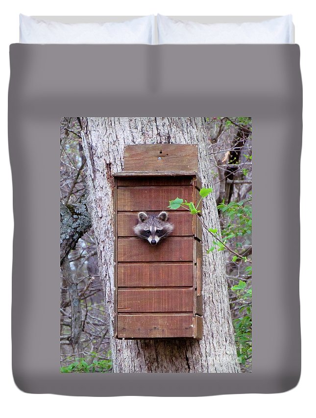 Duvet Cover featuring the photograph Raccoon 4 by James Seitzinger