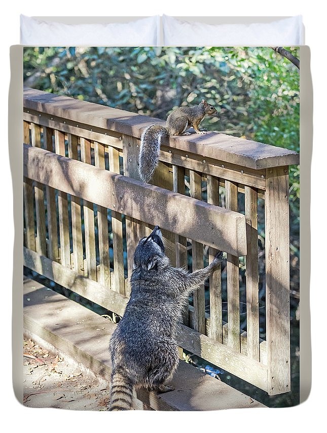 Animals Duvet Cover featuring the photograph Raccoon Shenanigans by Kate Brown