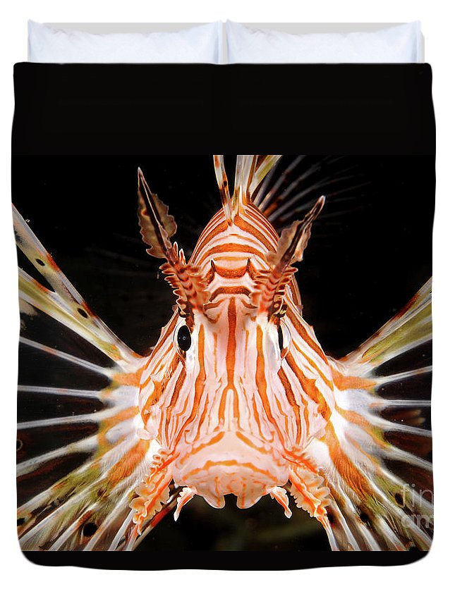 Radial Duvet Cover featuring the photograph radial Lionfish Pterois radiata by Hagai Nativ