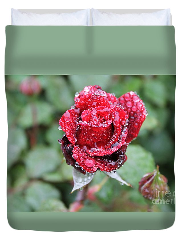 Spring Duvet Cover featuring the photograph Rain Drop Rose by Chester Taplette