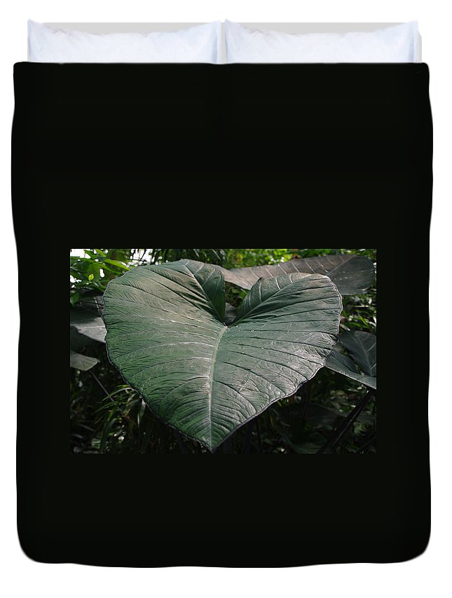 Large Leaf Duvet Cover featuring the photograph Rain On Leaf by Alice Markham