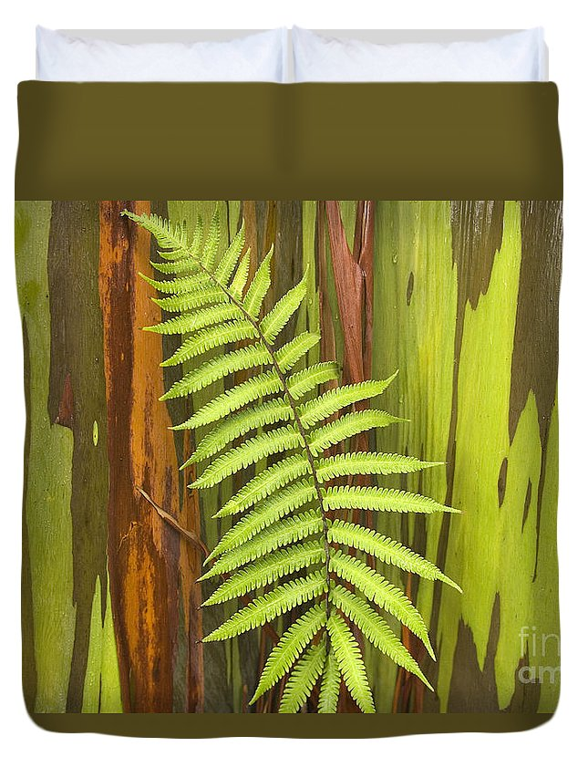 Background Duvet Cover featuring the photograph Rainbow Eucalyptus And Fern by Ron Dahlquist - Printscapes