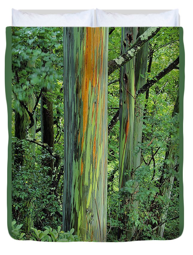 Beautiful Duvet Cover featuring the photograph Rainbow Eucalyptus by Ron Dahlquist - Printscapes