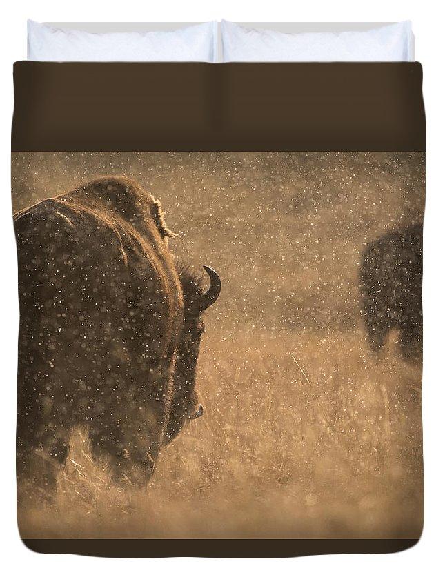 Chris Bowman Duvet Cover featuring the photograph Rainy Bison by Chris Bowman