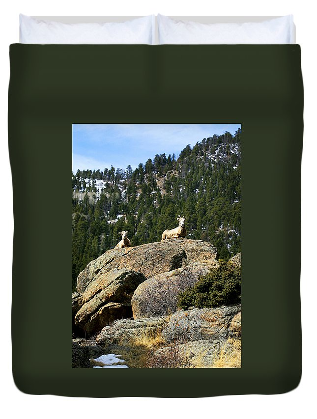 Ram Duvet Cover featuring the photograph Ram On The Watch by Marilyn Hunt