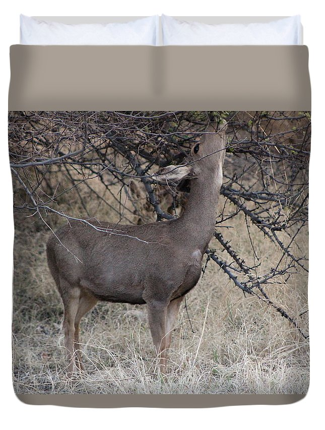 Deer Duvet Cover featuring the photograph Reach by Colleen Cornelius