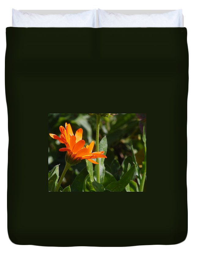 Orange Daisy Duvet Cover featuring the photograph Reach For The Sun 2 by Amy Fose