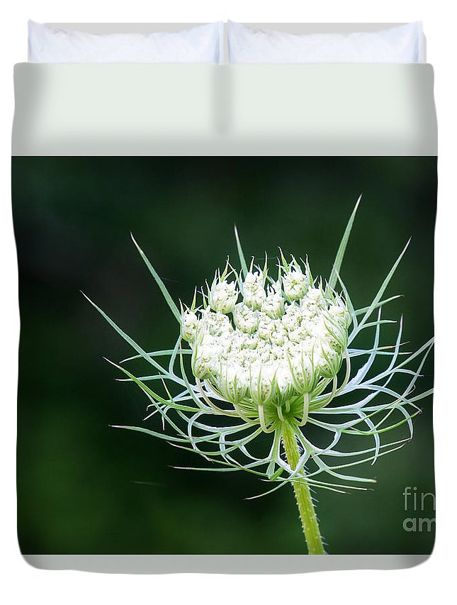 Flower Duvet Cover featuring the photograph Reaching For The Stars by Sharon McConnell