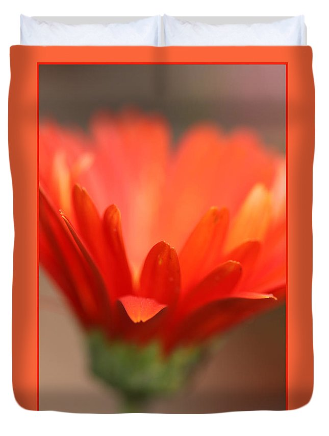 Daisy Plant Flower Orange Green Growing Photography Photograph Art Digital Duvet Cover featuring the photograph Reaching Out by Shari Jardina