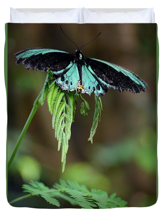 Butterfly Duvet Cover featuring the photograph Ready For Take Off by Pam Meoli