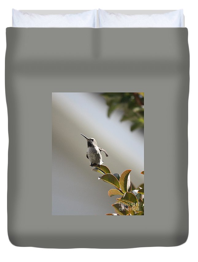 Hummingbird Duvet Cover featuring the photograph Ready For Takeoff by Carol Groenen