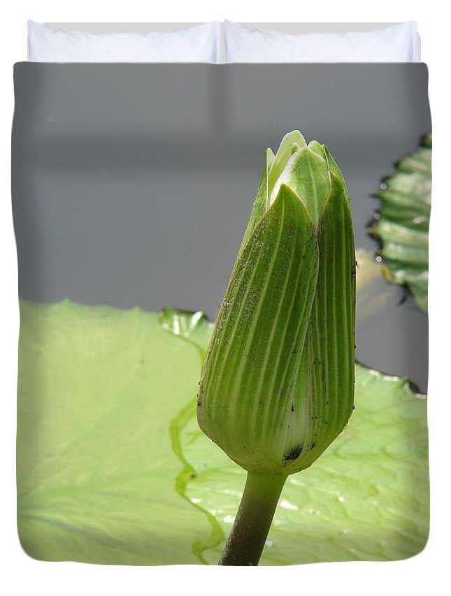 Lilly Duvet Cover featuring the photograph Ready To Bloom by Amanda Barcon