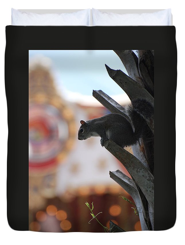 Squirrel Duvet Cover featuring the photograph Ready To Jump by Rob Hans
