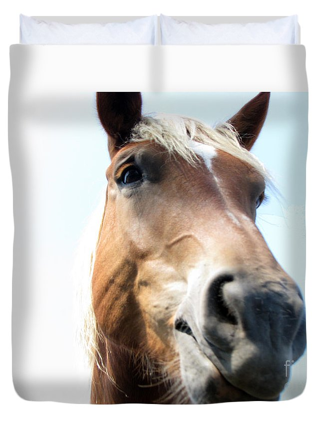 Horse Duvet Cover featuring the photograph Really by Amanda Barcon