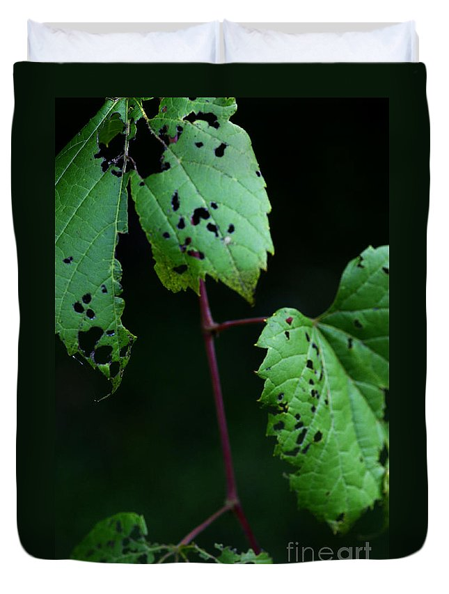 Leaves Duvet Cover featuring the photograph Reciprocal Change by Linda Shafer
