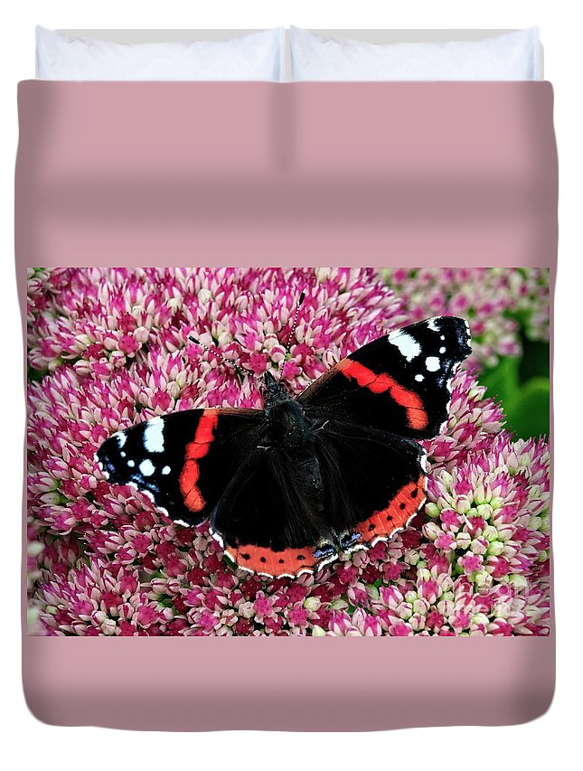 Butterfly Duvet Cover featuring the photograph Red Admiral Butterfly Vanesa Atalanta by Martyn Arnold