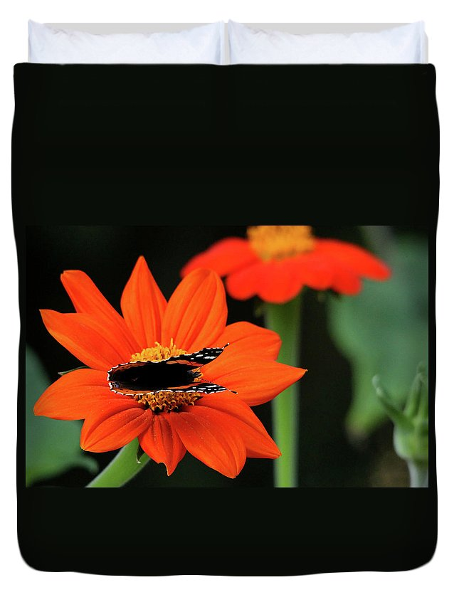Butterfly Duvet Cover featuring the photograph Red Admiral Nectaring On Tithonia by Debbie Oppermann