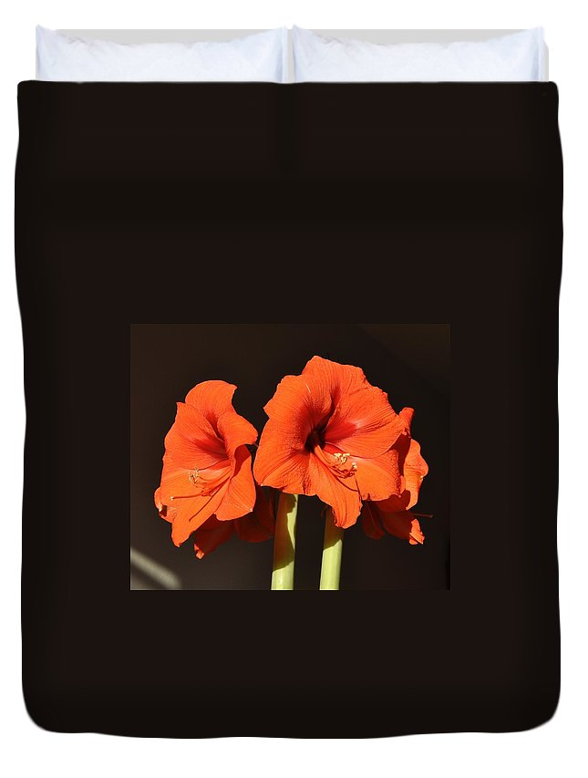 Amaryllis Flower Duvet Cover featuring the photograph Red Amaryllis by Georgeta Blanaru