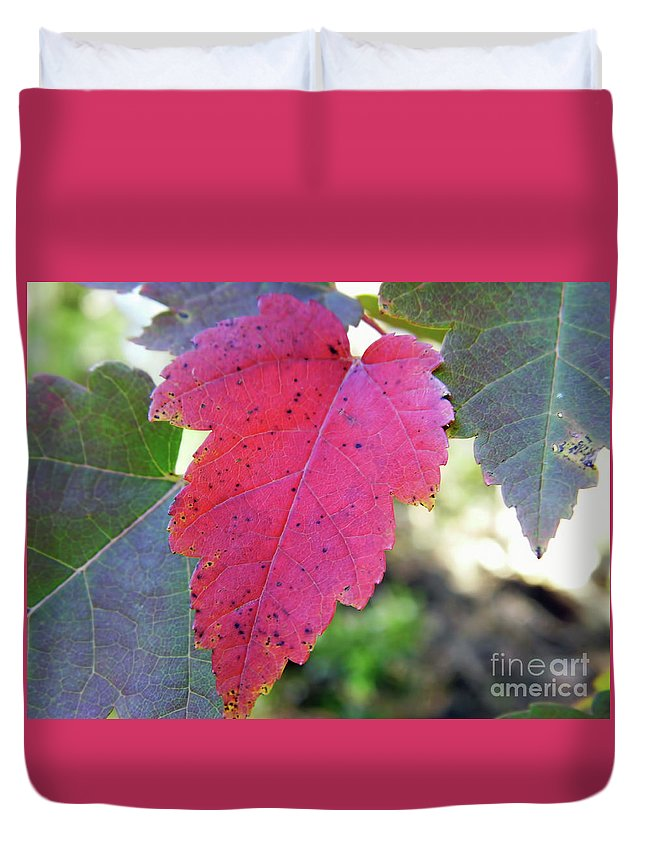 Autumn Duvet Cover featuring the photograph Red And Green by D Hackett