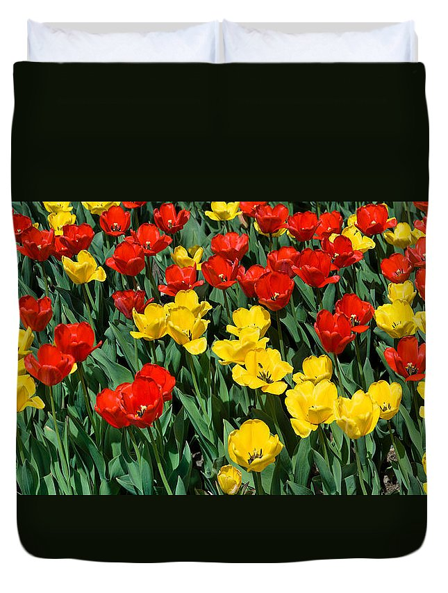 Red Duvet Cover featuring the photograph Red And Yellow Tulips Naperville Illinois by Michael Bessler
